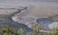 mud flats